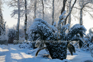 Produktbild 001338 Winter Schiffdorf © 2010 Ilona Weinhold-Wackernah